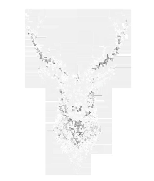 Logo Avaelys